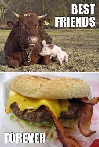 Cow and Pig: Best Friends that stay together