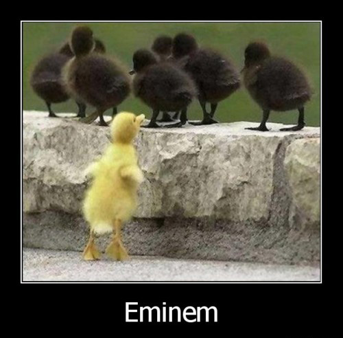 Eminem Ducklings