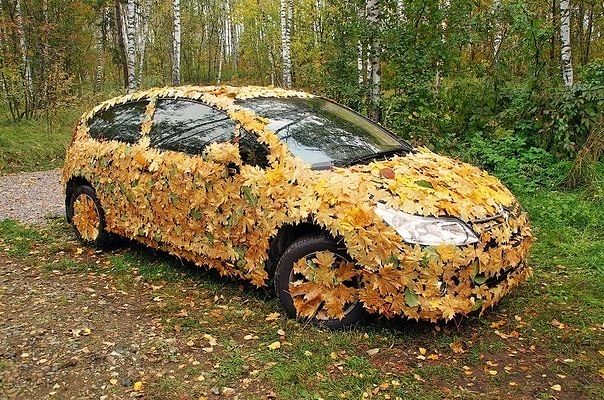 Autumn Camoflage