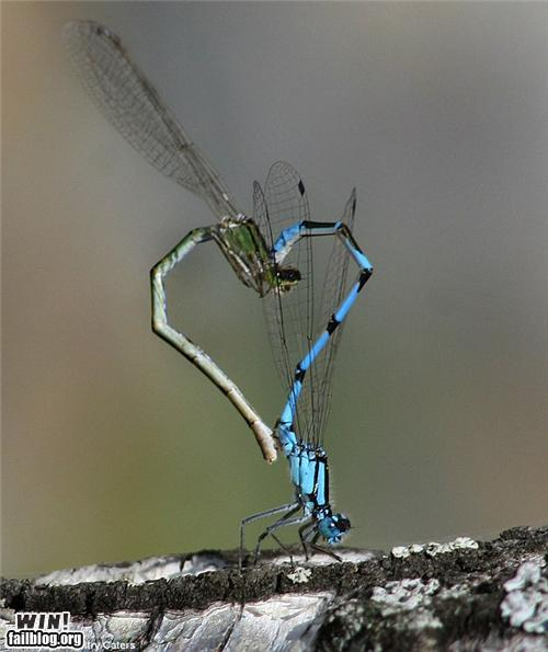 Dragonfly True Love