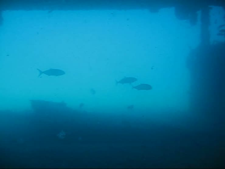 A 360&deg; pan from underneath the bow of the fin barge<br />Really amazing visibility this day