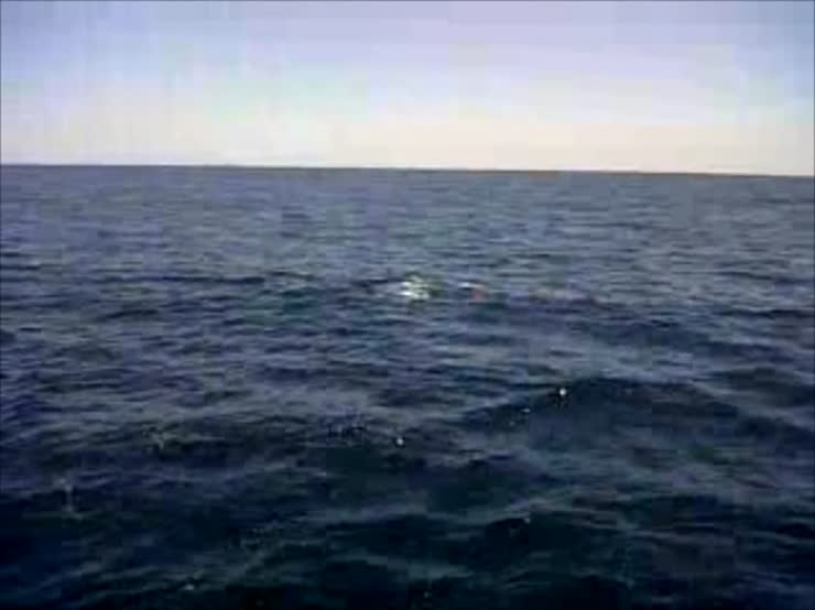 A pod of dolphins in front of the boat smacking their tails.