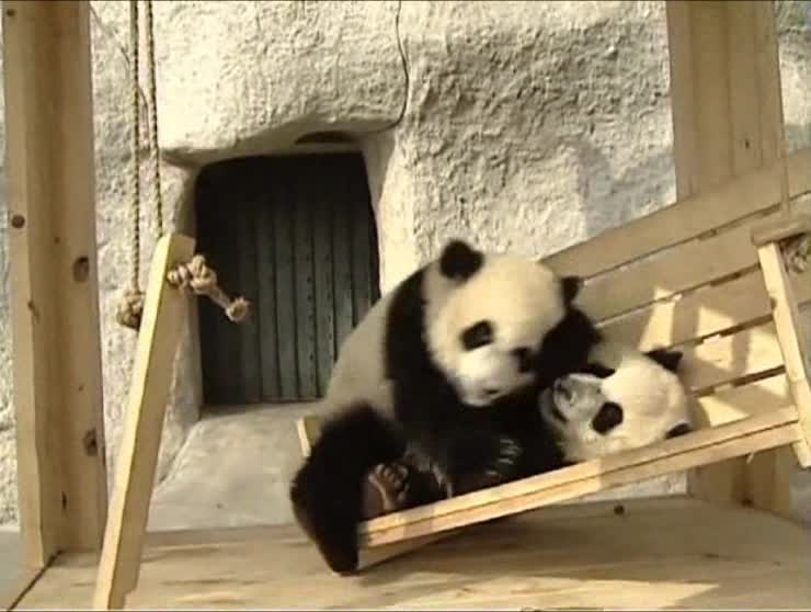 Make sure you watch at 45 second into the video for some cute panda sliding action